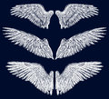 Wings vector image of different angelic Royalty Free Stock Photo