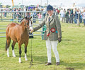 Winner at Black Isle Show. Royalty Free Stock Image