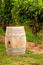 Wino winnic barrel Obraz Royalty Free