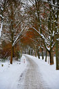 Winter alley Royalty Free Stock Photos