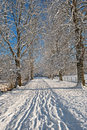 Winter alley Royalty Free Stock Photography