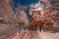 Winter alley with frozen trees and street light in toronto lights the night city ice on branches Stock Images