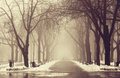 Winter alley in Odessa, Ukraine. Royalty Free Stock Photo
