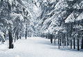Winter alley a path between trees covered with snow Royalty Free Stock Photo