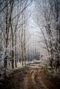 Winter alley running frozen trees snowy road Royalty Free Stock Photography