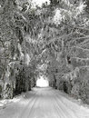 Winter alley with snow covered trees beautifull nature poland Stock Photos