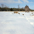 Winter animals gathering. Royalty Free Stock Photo