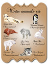 Winter animals set Royalty Free Stock Photography