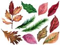Winter Autumn leaves plants and poinsettia leaves and Christmas tree leaves differnt elements watercolor illustration isolated on