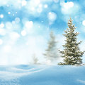 Winter background landscape with fir tree Stock Photography
