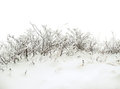 Winter background with snowy bush Stock Images