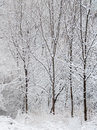 Winter background trees in snow after blizzard ontario canada Stock Photography
