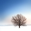 Winter bare tree landscape with single Stock Image