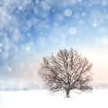 Winter bare tree and snowfall landscape with Royalty Free Stock Images