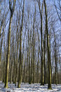 Winter beech forest Stock Photos