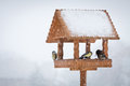 Winter birds animal feeder snowy day Stock Photos