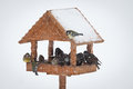 Winter birds animal feeder snowy weather Royalty Free Stock Images