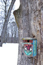 Winter birdseed on the painted nesting-box Stock Images
