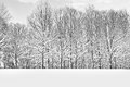Winter branches fresh snow contrasted on tree in this park in freehold new jersey Stock Photography