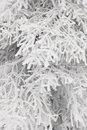Winter branches with snow without sky #6. Stock Photos
