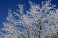Winter on branches snowy a blue sky background Stock Photos