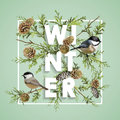 Winter Christmas Design in Vector. Winter Birds with Pines