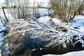 The winter cold river has not yet frozen, over the river a snow-covered tree hangs Royalty Free Stock Photo