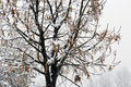 Winter cold tree with snow winter time Royalty Free Stock Images