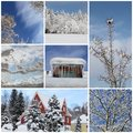 Winter collage with snow forest winter season snowy trees an a blue sky Stock Photo