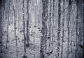 Winter colors beech tree forest background Royalty Free Stock Photo