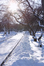 Winter Day in Park with Bright Sun Stock Photos