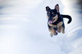 Winter dog run in snow Stock Photography