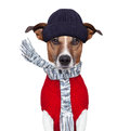 Winter dog scarf and hat Royalty Free Stock Images