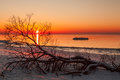 Winter evening seascape while colorful sunset over calm baltic sea with fallen tree in foreground covered with snow Royalty Free Stock Photography