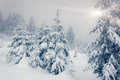Winter fantastic landscape national park carpathian ukraine beauty world Stock Photo