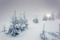 Winter fantastic landscape national park carpathian ukraine beauty world Royalty Free Stock Photo