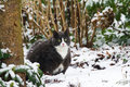 Winter fatty fat fluffy cat plays outside in the garden in the snow in Stock Image