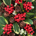 Winter fauna with variegated holly ivy mistletoe and blue spruce Stock Images