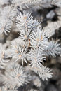 Winter fir-tree branch Stock Image