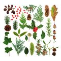 Winter Flora and Fauna Royalty Free Stock Photo