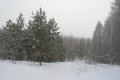 Winter foggy landscape in forest Royalty Free Stock Photos