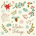 Winter foliage a beautiful collection Royalty Free Stock Image