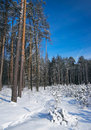 Winter in the forest Royalty Free Stock Photos