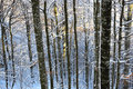Winter forest a beautiful light on an all frozen and covered in snow Royalty Free Stock Photography