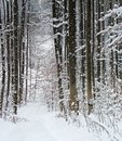 Winter forest detail with lots of snow at time in southern germany Royalty Free Stock Photo