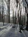 In the winter forest evening crimea mountains Stock Photo