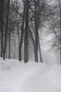 Winter forest and fog Royalty Free Stock Photo