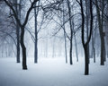 Winter forest in fog. Foggy trees in the cold morning Royalty Free Stock Photo