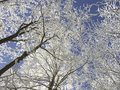 winter forest, frost covered trees Royalty Free Stock Photo