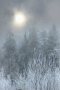 Winter forest in the haze in inclement weather Stock Photo